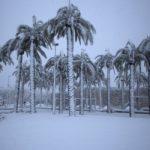 afp_israel_snow_10Jan13-975x650