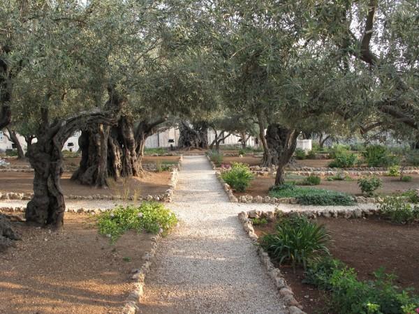 Gecsemáné kert