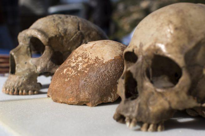 55 ezer éves koponya az izraeli Manot mellől