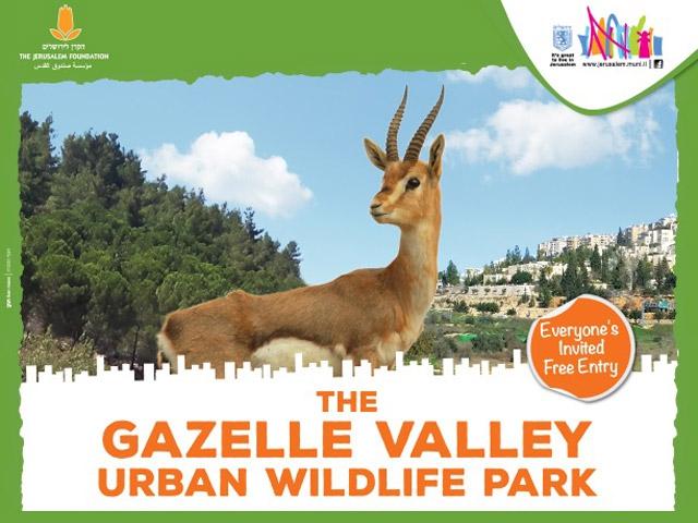 Izrael legújabb csodája: A gazellák völgye Jeruzsálemben