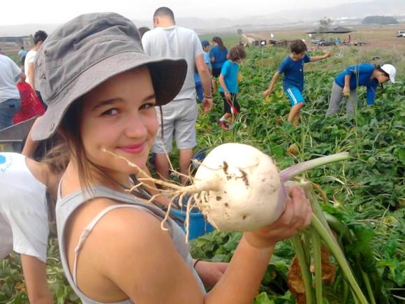 Ha nyár akkor…nyári munka! Diákmunka Izraelben