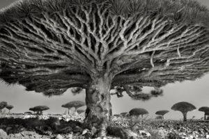 14 évet töltött egy fotós a világ legrégibb fáinak fényképezésével