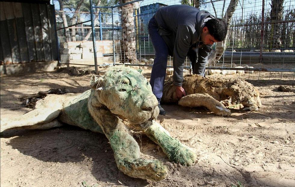 Éhen haltak az állatok egy gázai állatkertben (+18) – sokkoló képek