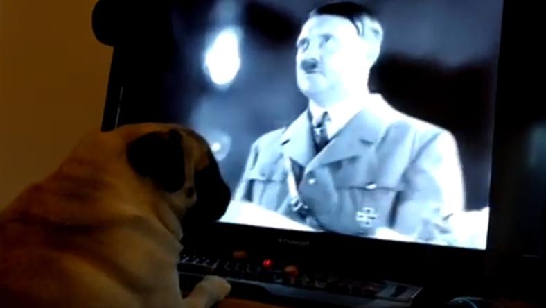 Lecsukták a gazdát, náci trükkökre tanította kutyáját