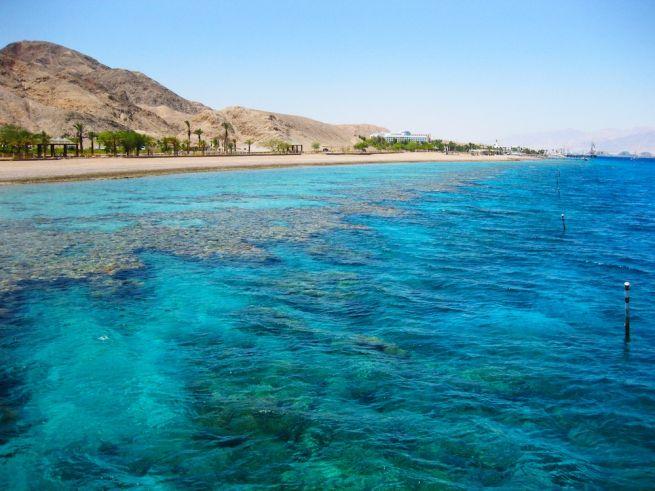 Korall-zátony