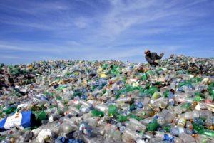 Izraeliek által tervezett baktérium oldhatja meg az egyik legsúlyosabb környezeti problémát
