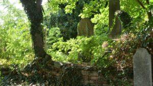 Rendbe hozzák a kisteleki zsidó temetőt