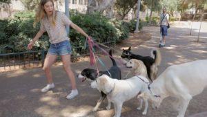 Tel-Aviv a kutyások Mekkája