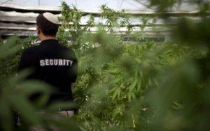 Orvosi marihuána nagyhatalom lenne Izrael