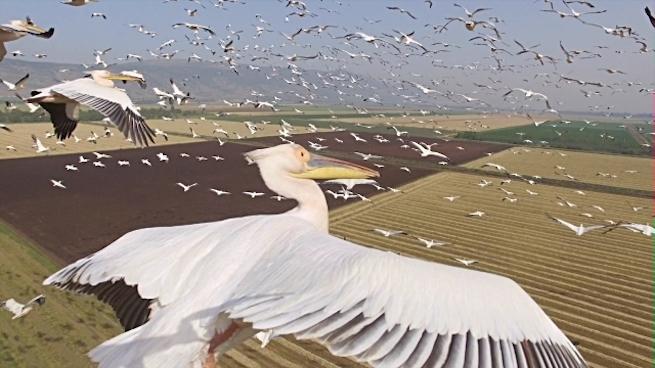 Így néz ki Izrael a vándormadarak szemszögéből