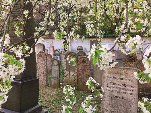 Séta a Csörsz utcai zsidó temetőben