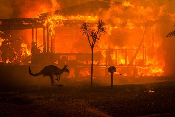 A jeruzsálemi állatkert segíti az ausztrál erdőtüzek miatt megsérült állatokat