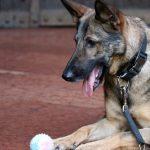Már robbanószerkereső kutyája is van a Mazsihisznek