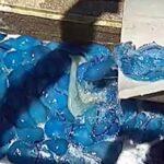 Több ezer medúza özönlött el egy izraeli erőművet