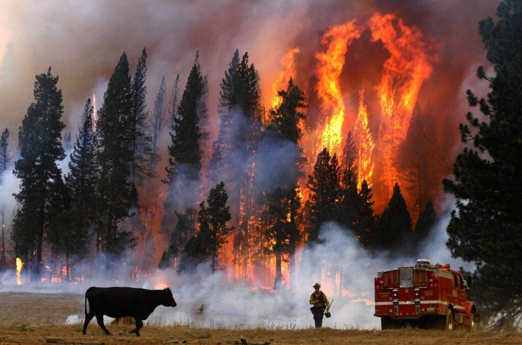Izraeli tűzoltók segítenek megfékezni a Kaliforniában pusztító tüzeket