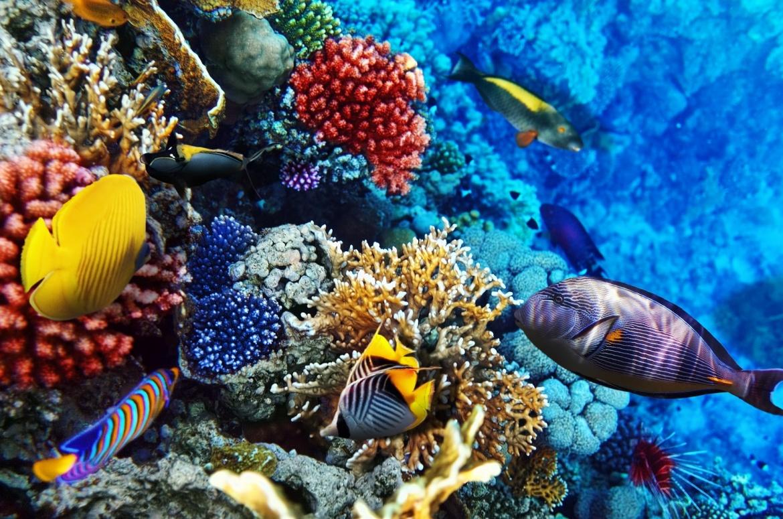 Komoly veszély fenyegeti a híres eilati korall-zátonyokat